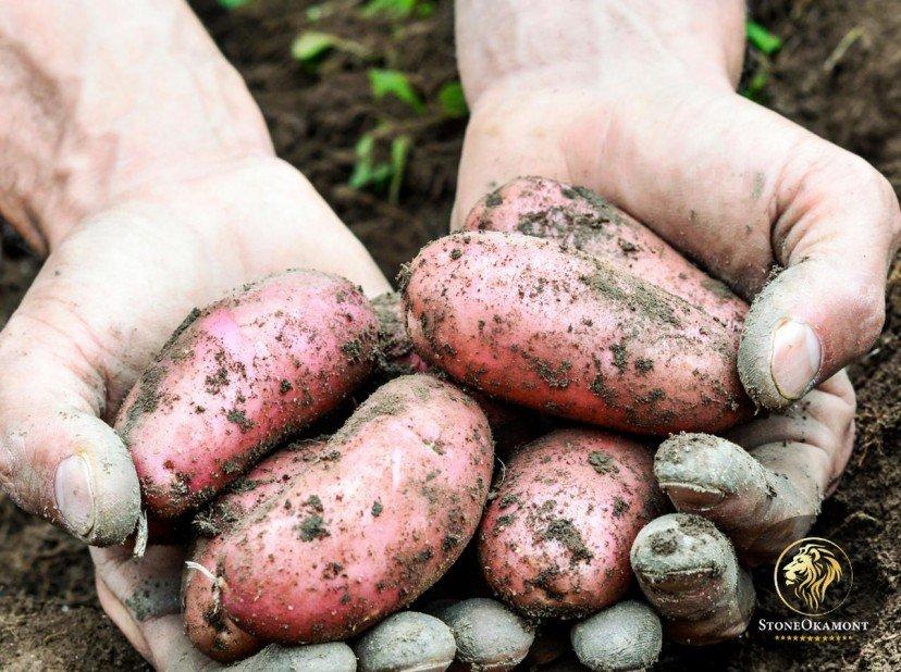 Como registrar alimentos orgânicos no MAPA?